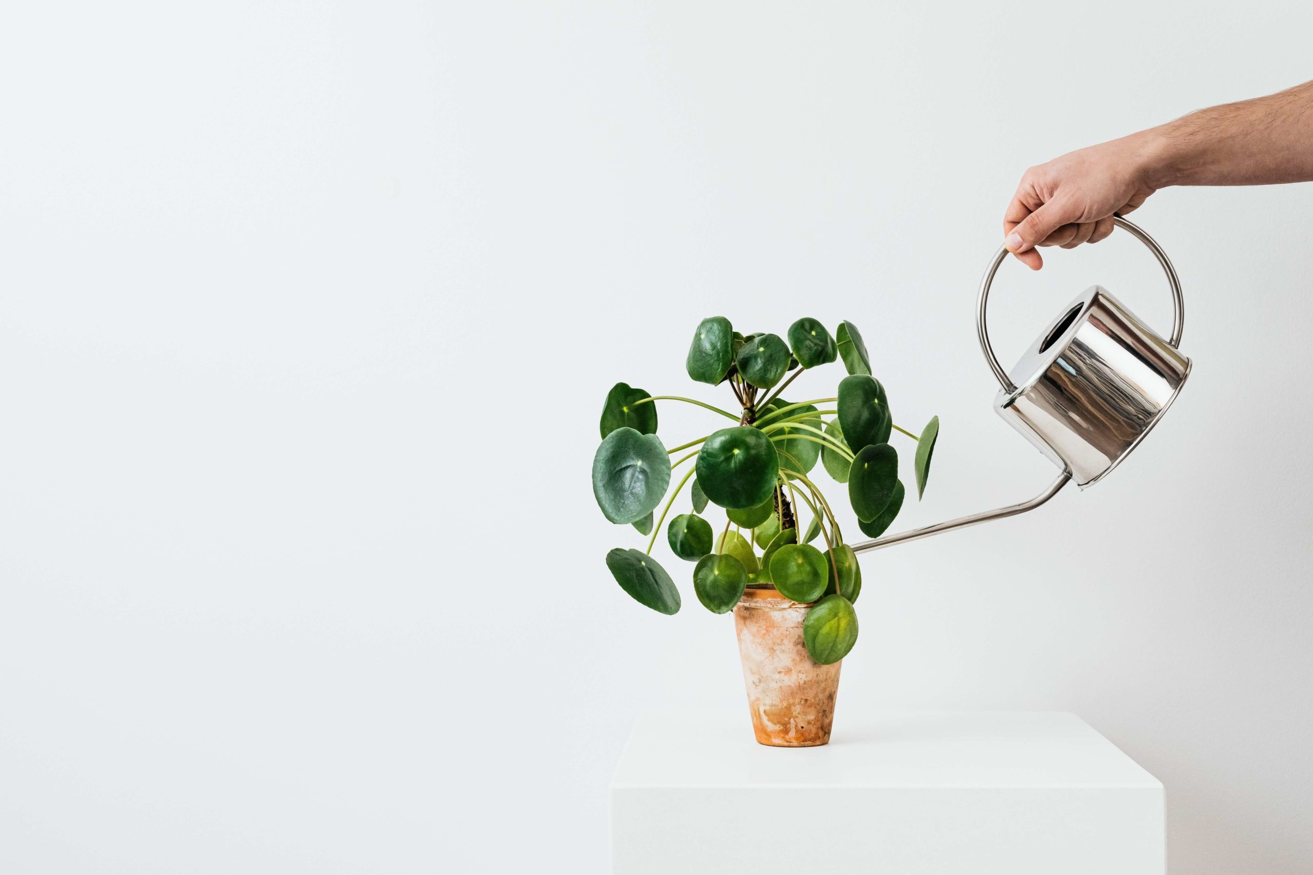 man watering potted plan