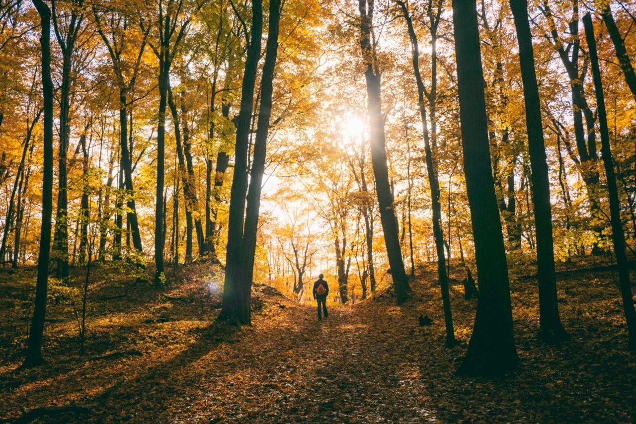 fall hike effect